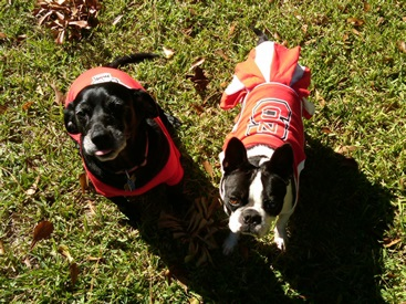 NC State dogs