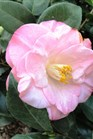 /Images/johnsonnursery/Products/Woodies/C__April_Remembered_3-7-13_for_web.JPG