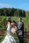 Addison Farms Vineyard - 6