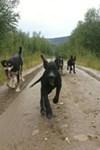 Alaska Dog Mushers Association - 6