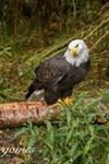 Alaska Zoo - 6