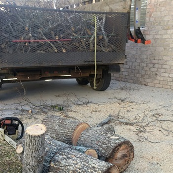 Uprooting Hickory
